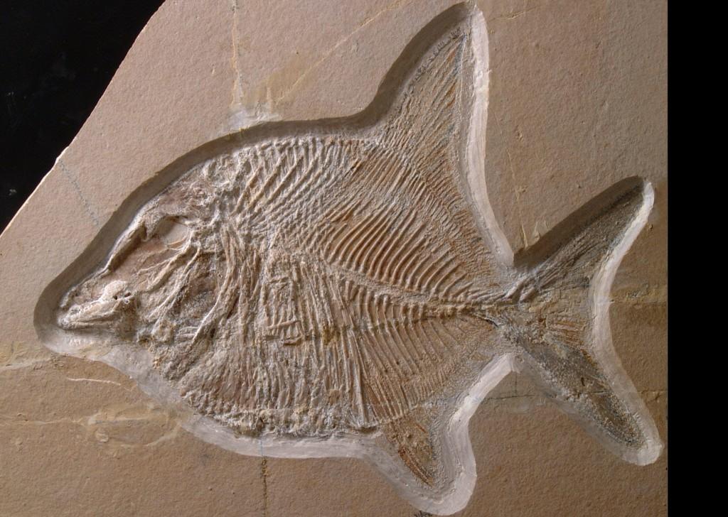 Urzeitliche Funde in Wattendorf – fossile Haie suchen Paten.