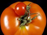 Mediterrane Kost mit heimischen Produkten
