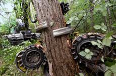 Die Waldesruh' ist hin