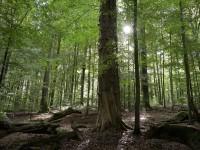 Von Holzwegen und anderen Einbahnstraßen