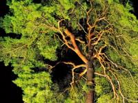 … ein Baum ist ein Baum ist ein Baum …