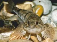 Fisch mit Tradition